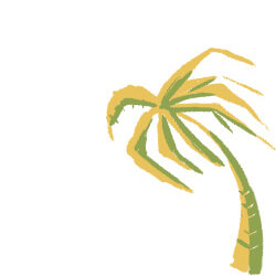 Palm Tree Side Image