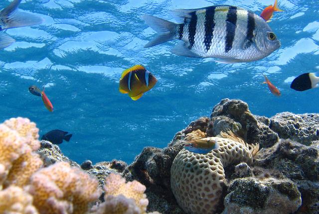 fish-291322_640