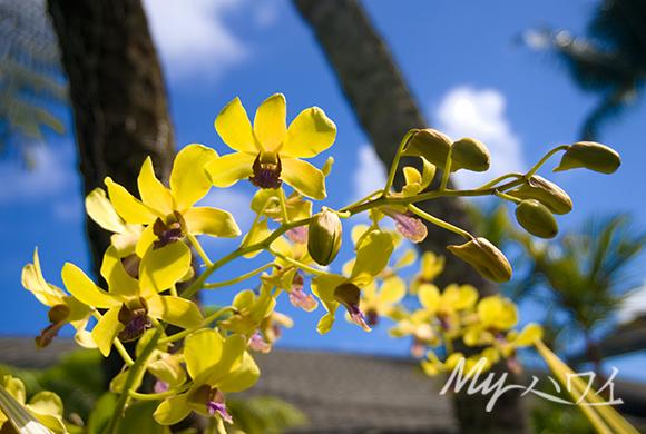 flower-1-5