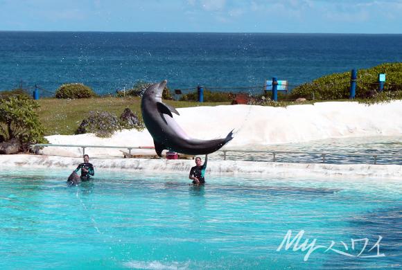 dolphin_slp