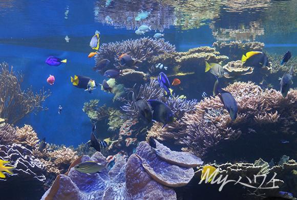 ワイキキ水族館の魚