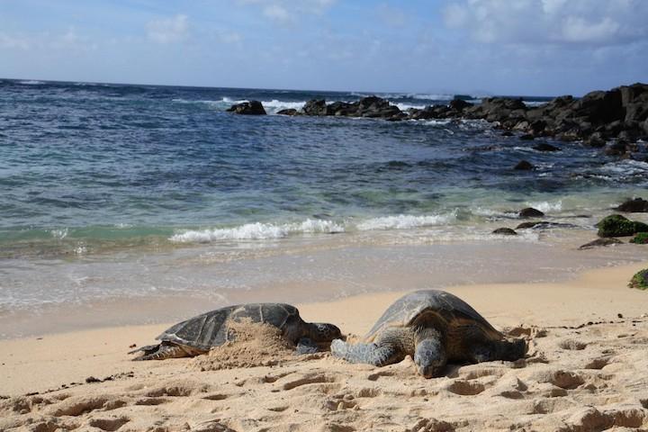 ノースショア、ハワイのベストビーチ