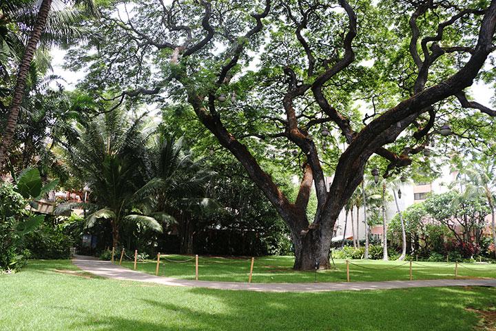 ロイヤル ハワイアン、ガーデン