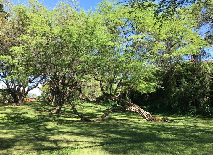 カピオラ二公園