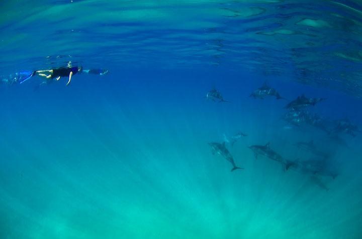 ハワイでドルフィンツアー