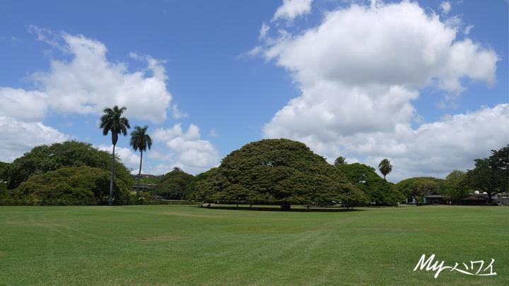 この木なんの木、モアナルアガーデン